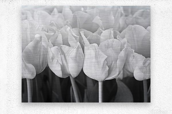 Bunch of Tulips close-up  Metal print