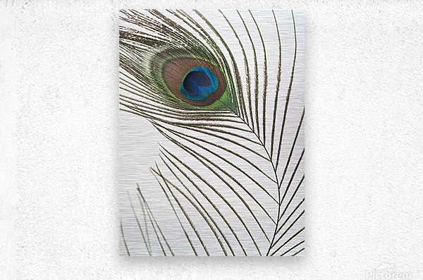Peacock feather  Impression metal