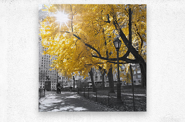 Pathway through Central park, New York City  Metal print