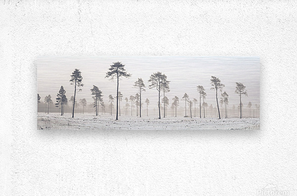 Snowy forest in winter  Metal print