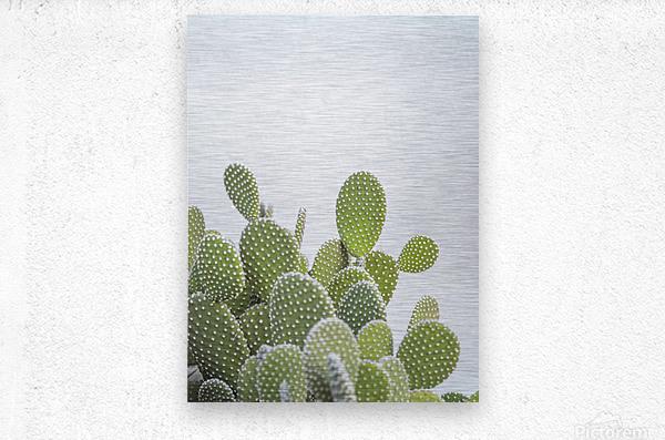 Cactus plant  Metal print