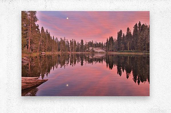 Azalea Sunset  Metal print