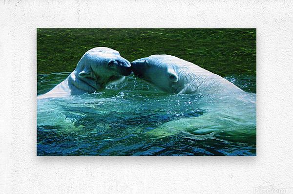 Kiss Me Polar Bears  Metal print