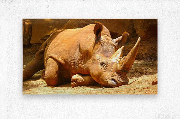 Rhino - Natural World Kids Gallery  Metal print