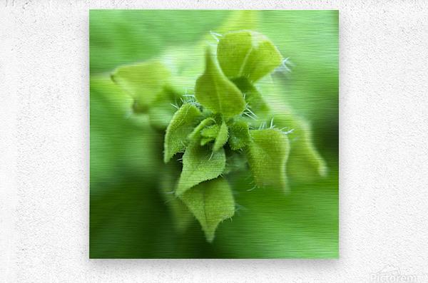 24_Green_Plant_6772_SQUARE  Metal print