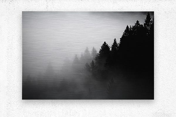 Pine trees in the fog  Metal print