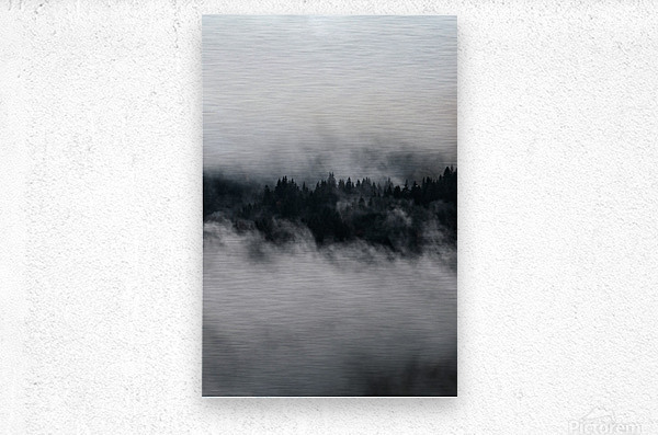 Layers of trees  Metal print