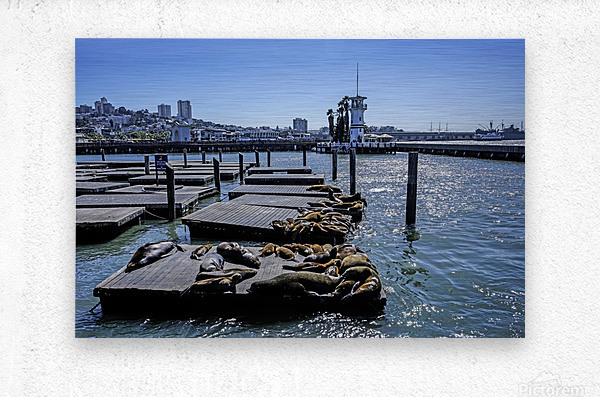 The Wharf @ San Francisco  Metal print