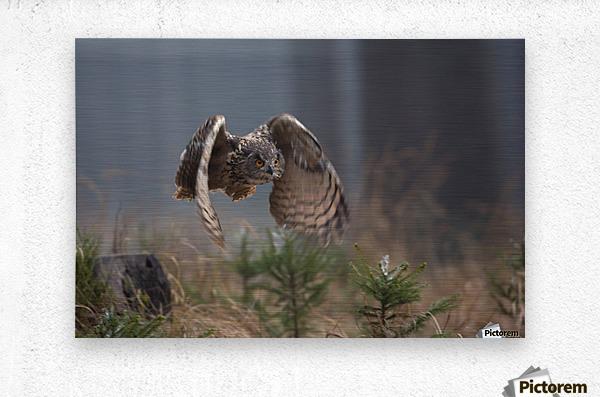 Eurasian Eagle-Owl by Milan Zygmunt   Metal print