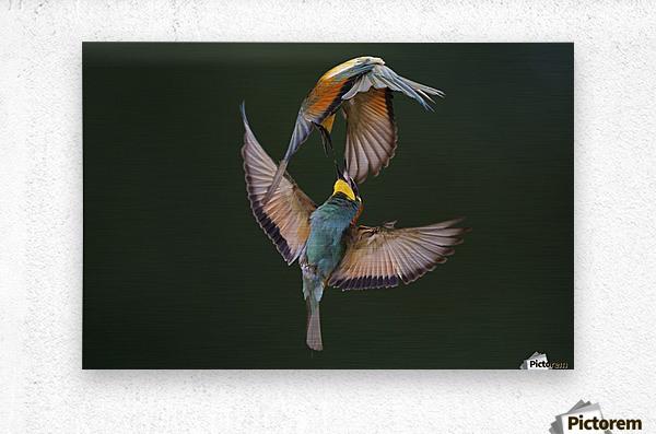 Fight Between Rainbows by Marco Redaelli   Metal print