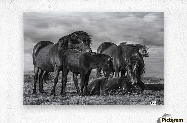 Happy Family by Bragi Ingibergsson  Metal print