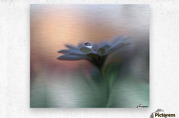 Eyes of the Light by Juliana Nan   Metal print