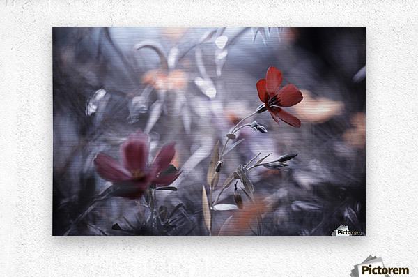 Une Fleur, une Histoire by Fabien BRAVIN   Impression metal