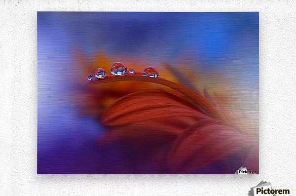 Metamorphosis by Juliana Nan   Metal print