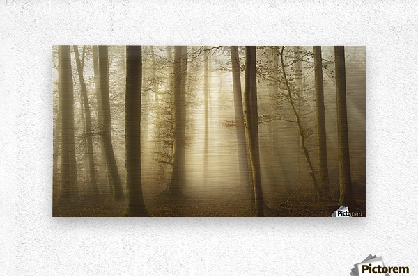 Into the Trees  Metal print