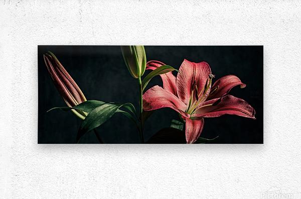 Floraison 1  Metal print
