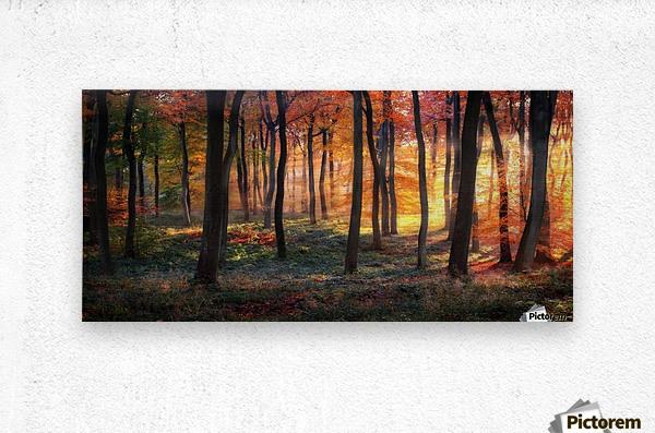 Autumn Woodland Sunrise  Metal print