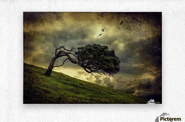 Winds of Change by Peter Elgar   Metal print