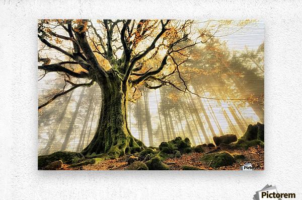 November by Christophe Kiciak   Metal print