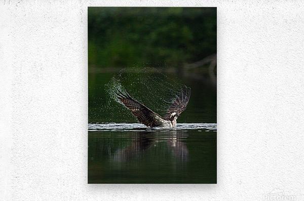 Wesley Allen Shaw 01134  Metal print
