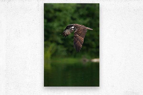 Wesley Allen Shaw 00460 1609734665.9256  Metal print