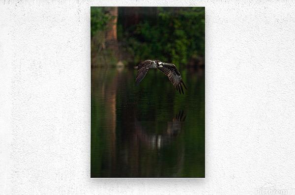 Wesley Allen Shaw 00747  Metal print