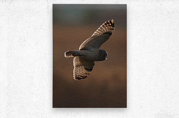 Wesley Allen Shaw 09068  Metal print