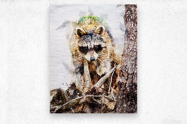 Raccoon In The Woods  Metal print