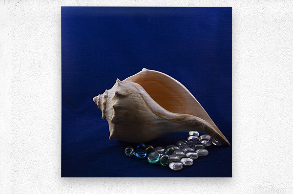Single Conch Shell With Colored Glass   Metal print