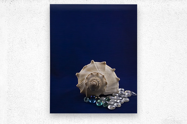Spiral Conch Shell With Colored Glass  Metal print