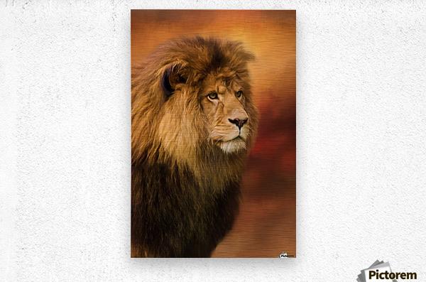Lion Legacy - Lion Art by Jordan Blackstone  Metal print