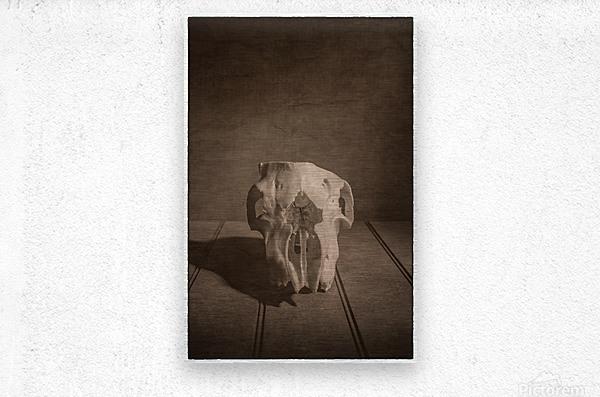 Cranium  Metal print