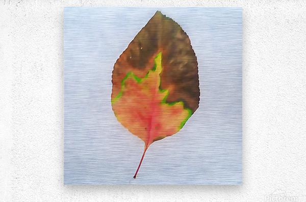 snow leaf  Metal print