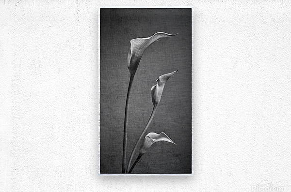 Etude Zen 8 c  Metal print