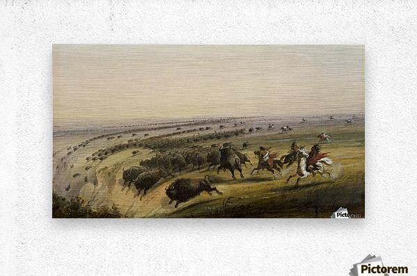 Hunting Buffalo  Metal print