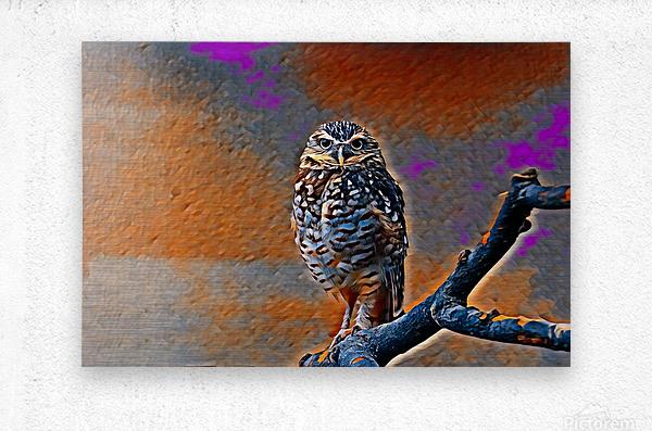 OWL - Stylized  Metal print