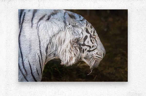 White Bengal Tiger 2  Metal print