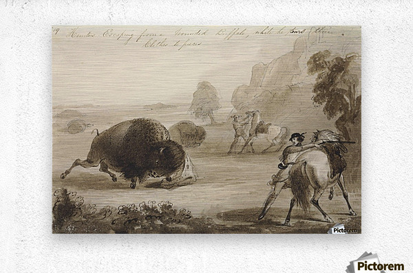 Hunters Escaping from a Wounded Buffalo, While He Tears Their Clothes to Pieces  Metal print