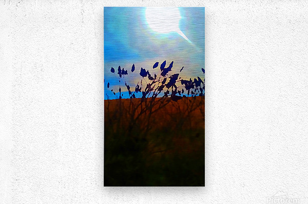 Mid Afternoon Beauty  Metal print
