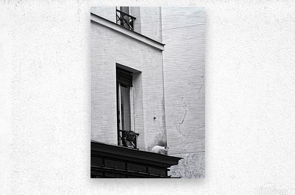Paris cat  Impression metal