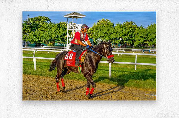 Racehorse01  Metal print