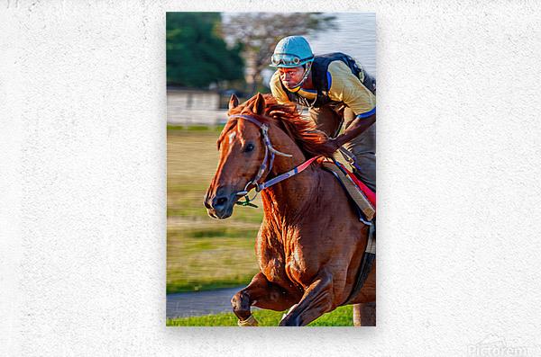 Racehorse11  Metal print