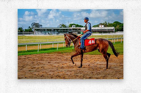 Racehorse04  Metal print