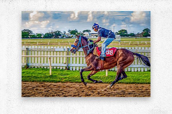 Racehorse09  Metal print