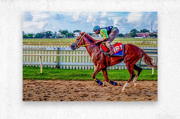 Racehorse10  Metal print