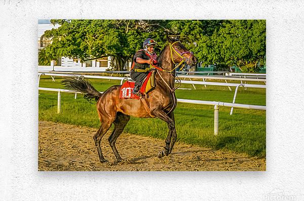 Racehorse12  Metal print