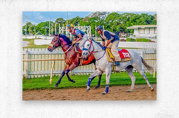 Racehorse08  Metal print
