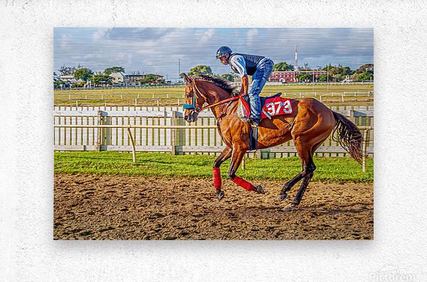 Racehorse06  Metal print