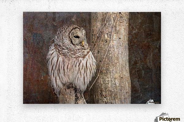 Barred Owl in Grunge  Metal print