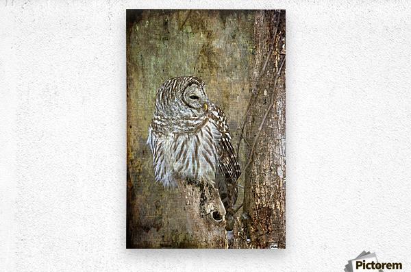 Grungy Owl  Metal print